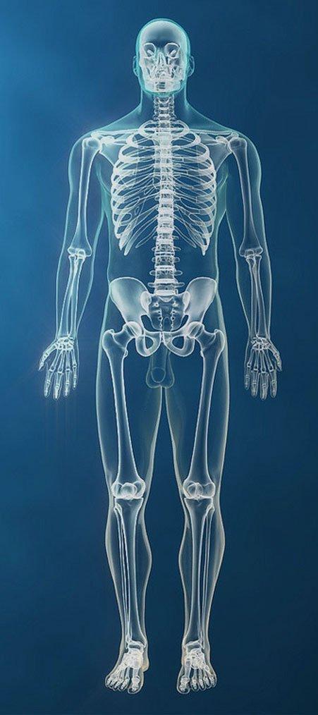 full skeleton view